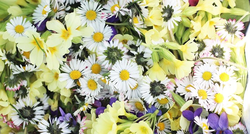 Nutzen Sie unser Frühlingsangebot: -25%