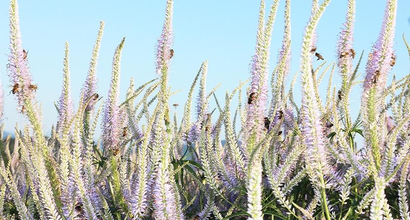 Sommerangebot -25% auf alle Pflanzen